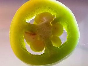 Smartphone MAcro Yellow Chilli Slice