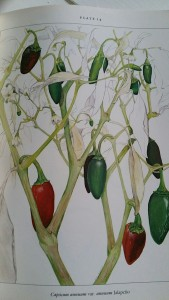 Peppers Book - Jalapeno